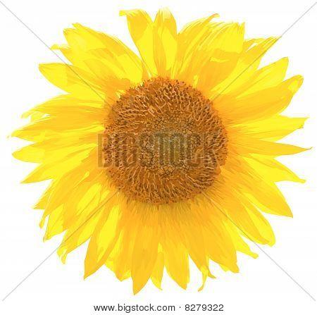 Vector sunflower.