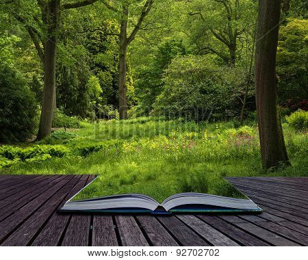 Landscape Image Of Beautiful Vibrant Lush Green Forest Woodland Scene Conceptual Book Image
