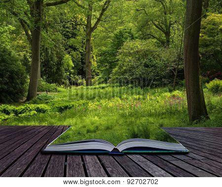 Landscape Image Of Beautiful Vibrant Lush Green Forest Woodland Scene Conceptual Book Image
