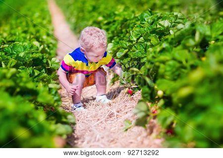 Child Picking Fresh Strawberry On A Farm