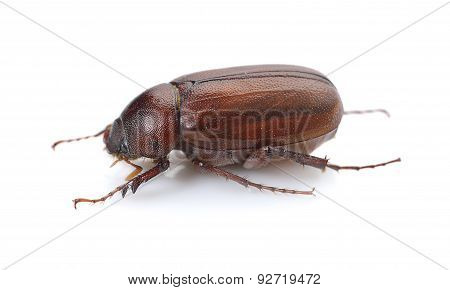Insect Isolated On White Background