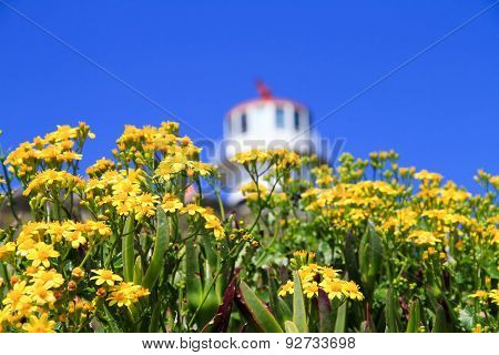 Yellow flowers and a lighthouse