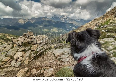 Border Collie Dog Looking Out Across Corsican Mountains