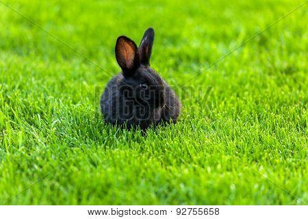 Black Rabbit, Rabbit on the lawn Rabbit on the green grass, a frightened rabbit, rabbit and child