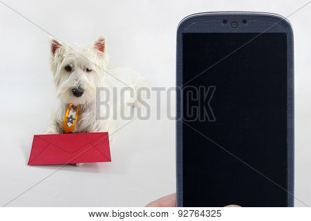 Smartphone and a west highland white terrier. Idea for Canine applications, Pet shop messages, veterinarians, Social dog apps, and others