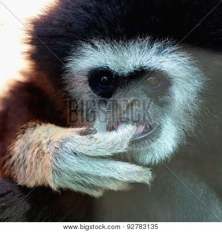 Closeup Of Monkey In Zoo