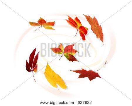 Collection Of Autumnal Leaf