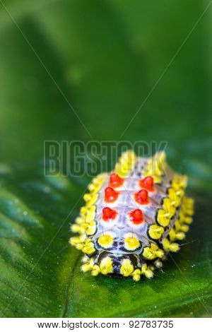 Color Butterfly Worm