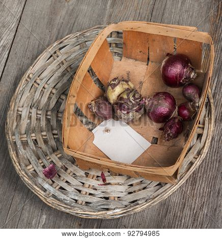 Hyacinth Bulbs On A Background Of Wicker Round