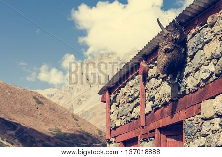 Yak head on a building. Tibetan animistic tradition.