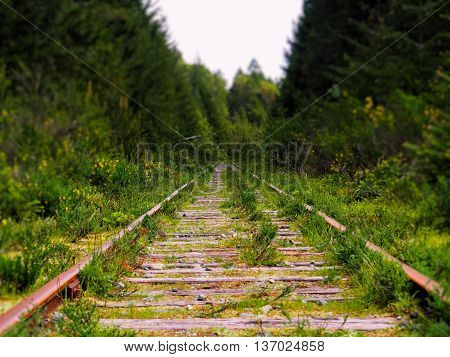 Overgrown Railway Line in Lush Green Forest