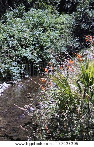 Outdoor Background - tranquil stream on a summer day