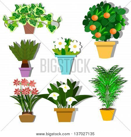 Set potted plants in flat design style, vector illustration, flowers in pots