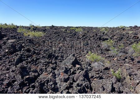Sagebrush is beginning to grow in the lava flows at Idaho's Craters of the Moon National Monument. Some of the lava flows are as recent as only two thousand years in age.