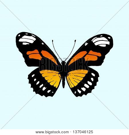 Vector butterfly Monarch. Vector Butterfly Danaus plexippus