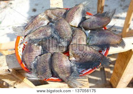 Dried Snake Skin Gourami fish on tray with sun light