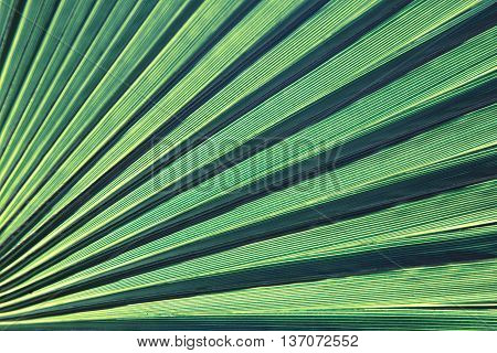 Lines and textures of Green Palm leaves. Toning foto