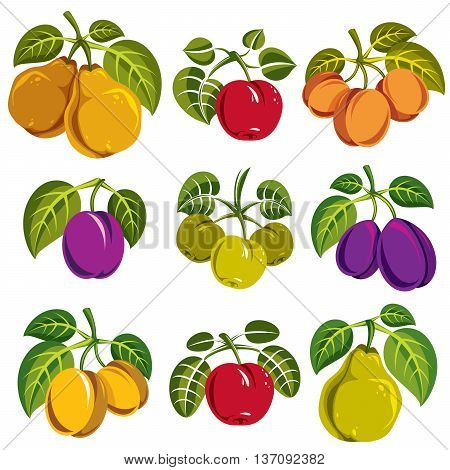 Set of vector ripe fruits and berries with green leaves fruity trees design elements isolated on white background.