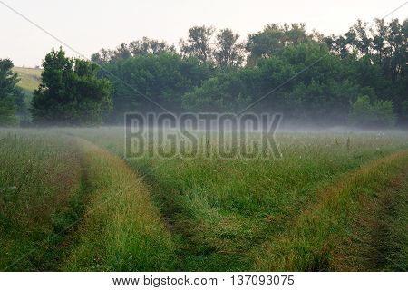 Rural road fork at morning haze in green meadow