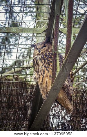 Owl At Zoo.it Is A Nocturnal Bird Of Prey With Large Forward-facing Eyes Surrounded By Facial Disks,