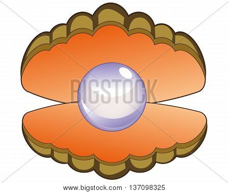 Openning seashell with pearl inwardly on white background .Vector illustration