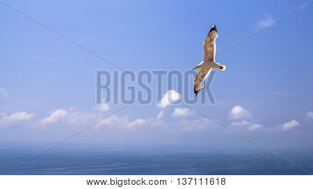 Seagull having spread wings flies over water