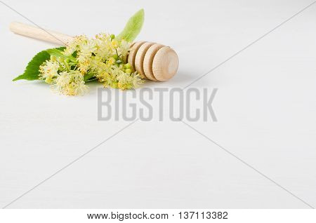 Fresh linden branch with flowers on a white wooden background. Folk, alternative, complementary medicine, traditional medicine.