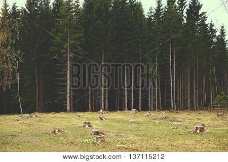 Edge Deforestation, Forest