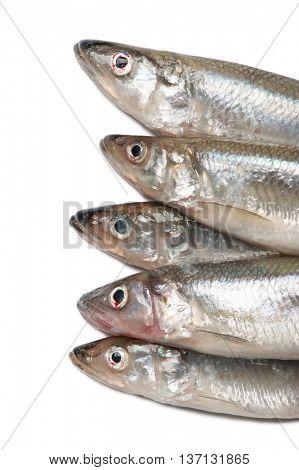 Smelt fishes isolated on white background
