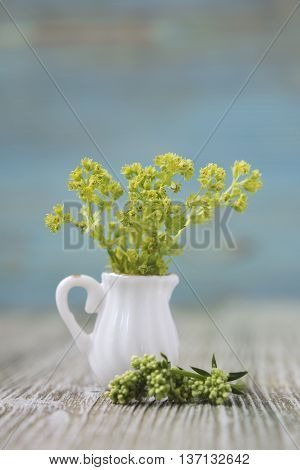 Bouquet of Lady's Mantle flowers in miniature diminutive jug. Macro close-up photo with soft focus bouquet of flowers. Rustic colored wooden background
