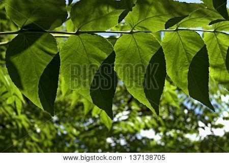 nice twig with leaves in the garden