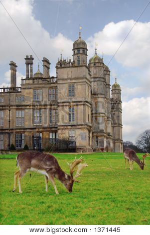 Rare breed of deer at 16th Century Burghley House Stamford England. poster