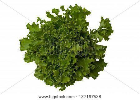 sałata zielona Lollo zdjęcie wykonano na straganie warzywnym w Wielkiej Brytanii w dniu 01.05.2009 r.