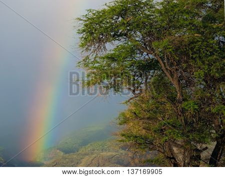 Rainbow at dusk with tree in Maui,Hawaii