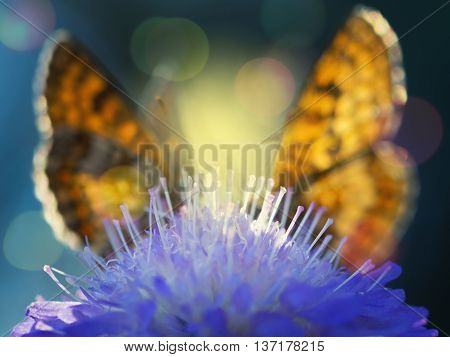 Two Heath fritillary butterflies (Melitaea athalia) sitting on the floral pyramid. Blur style