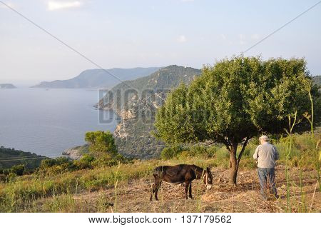 A donkey with its master in Greece