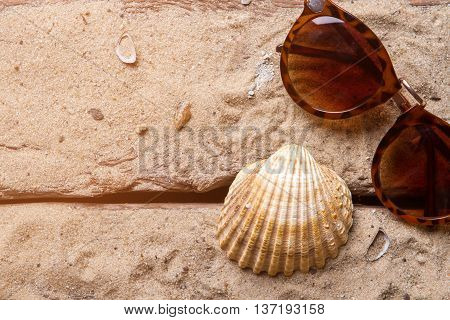 Seashell and brown sunglasses. Woman's sunglasses on sand. Seashore is waiting for you. Find warm and cozy place.