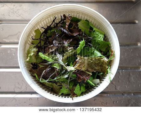 Lettuce leaves - cos, romaine, lollo rosso and mizuna - in a salad spinner for drying, on a wet metal draining board with water on.