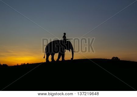 Silhouette sunset Elephant and mahout on the Mountain