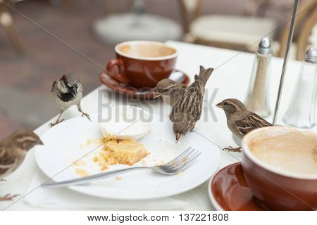 Sparrows dine uninvited at local cafe when patron leave.