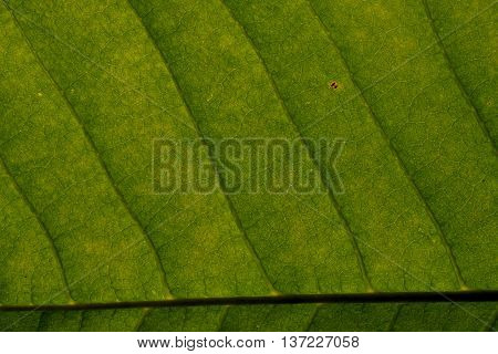 structure of green leaf in the garden