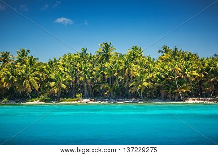 Carribean sea and palm trees, beautiful panoramic view