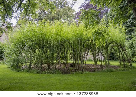 LACOCK ABBEY, LACOCK, WILTSHIRE, UK, 21 JUNE 2016 - Woven willow cloisters at Lacock Abbey Lacock Wiltshire UK