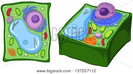 Close up diagram of plant cell illustration