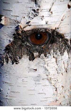 Willow Eye