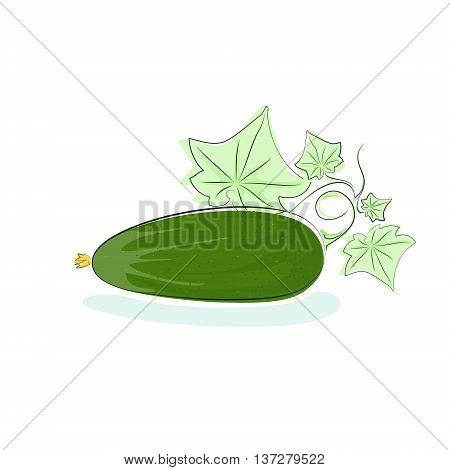 Cucumber, Cucumber Vegetable with Leaves Isolated on White Background, Vector Illustration