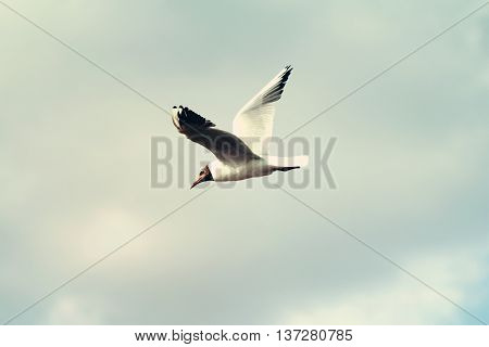 Gull Bird Flying In The Sky