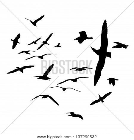 Flock of sea gull birds. Black on white silhouettes
