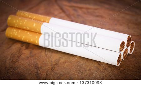 Close up of Filter cigarette on dry tobacco leaves