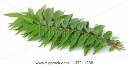 Close up of Curry leaves over white background